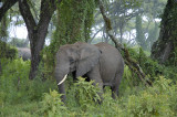 A family of elephants lives along the desent road
