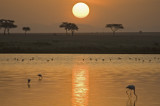 Serengeti sunrise - my favorite picture of all!
