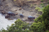 Hippos on the Mara River