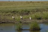 Maribu stork copy