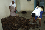 At Nanyuki Spinners and Weavers - sorting the raw wool