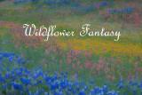Wildflower Fantasy