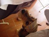 armer Bettelhund