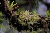 Bromeliads, Moss