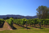 Vineyards at Marlborough