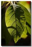 20081115 -- 132738 -- Canon 5D + Sigma 70 / 2.8 macro @ f / 2.8, 1/500, ISO 100