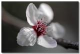20090306 -- 155021 -- Canon 5D + Sigma 70 / 2.8 macro @ f/4, 1/320, ISO 400