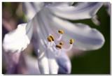 20050603 -- 1903.jpg  Canon 20D + 60 / 2.8 macro @ f / 4, 1/125, ISO 100