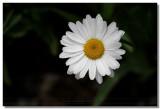 20060705 -- 0775.jpg  Canon 5D + Sigma 150mm / 2.8 Macro @ f / 5.6, 1/800, ISO 100