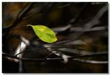 20070104 -- 9453.jpg  Canon 5D + Sigma 150mm / 2.8 macro @ f / 5.6, 1/200, ISO 100