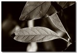 20070224 -- 4109.jpg  Canon 5D + SIgma 150 / 2.8 macro @ f / 8, 1/125, ISO 200