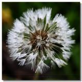 20070409 -- 2357.jpg  Canon 5D + Sigma 150 / 2.8 macro @ f / 8, 1/200, ISO 1600 (strong crop)