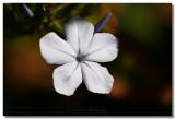 20070427 -- 130906  Canon 5D + Sigma 150/2.8 macro @ f/8, 1/800, ISO 400