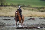 Misc Horse Pics
