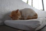 Gato de El Defin Blanco