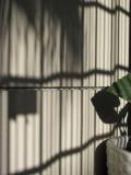 lp shadows
