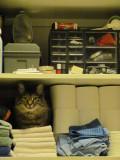 Closet Rocky
