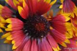 ABHA - Flower - 001.jpg