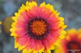 ABHA_Flower - 002.jpg