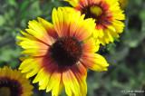 ABHA_Flower - 004.jpg