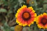 ABHA_Flower - 005.JPG
