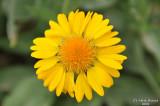 ABHA_Flower - 011.JPG