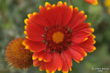 ABHA_Flower - 014.JPG