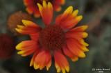 ABHA_Flower - 015.JPG