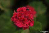 ABHA_Flower - 016.JPG