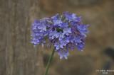 ABHA_Flower - 017.JPG