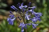 ABHA_Flower - 033.jpg