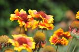 ABHA_Flower-008.JPG
