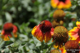 ABHA_Flower_Buds - 018.jpg