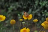 ABHA_Flower_ButterFly_037.JPG