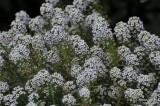ABHA_Flowers_Tiny - 009.JPG