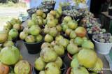 040-Fresh Fruits.jpg