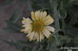 Flower_102.jpg