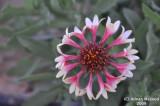 Flower_106.jpg