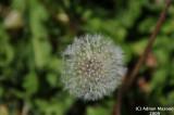 Flower_123.jpg