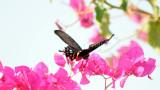 Butterfly_0901.jpg