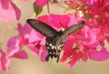 Butterfly_0902.jpg