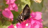Butterfly_0903.jpg