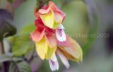 Flower_09003.jpg
