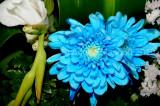 Flower_04101.JPG