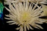 Flower_04103.JPG