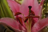 Flower_04105.JPG