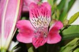 Flower_04107.JPG