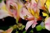 Flower_04109.JPG