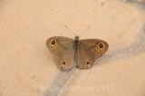 Butterfly_10111.jpg