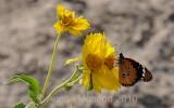 Flower_10112.jpg